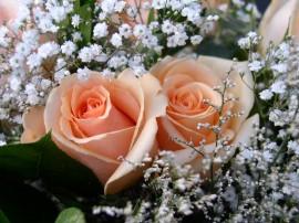 Papel de parede Rosas Delicadas