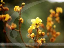 Papel de parede Flores Brasileiras Amarelas