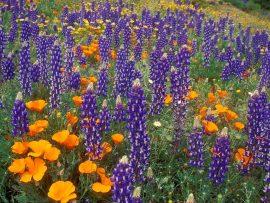 Papel de parede Flores do campo
