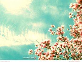 Papel de parede Flores do Céu