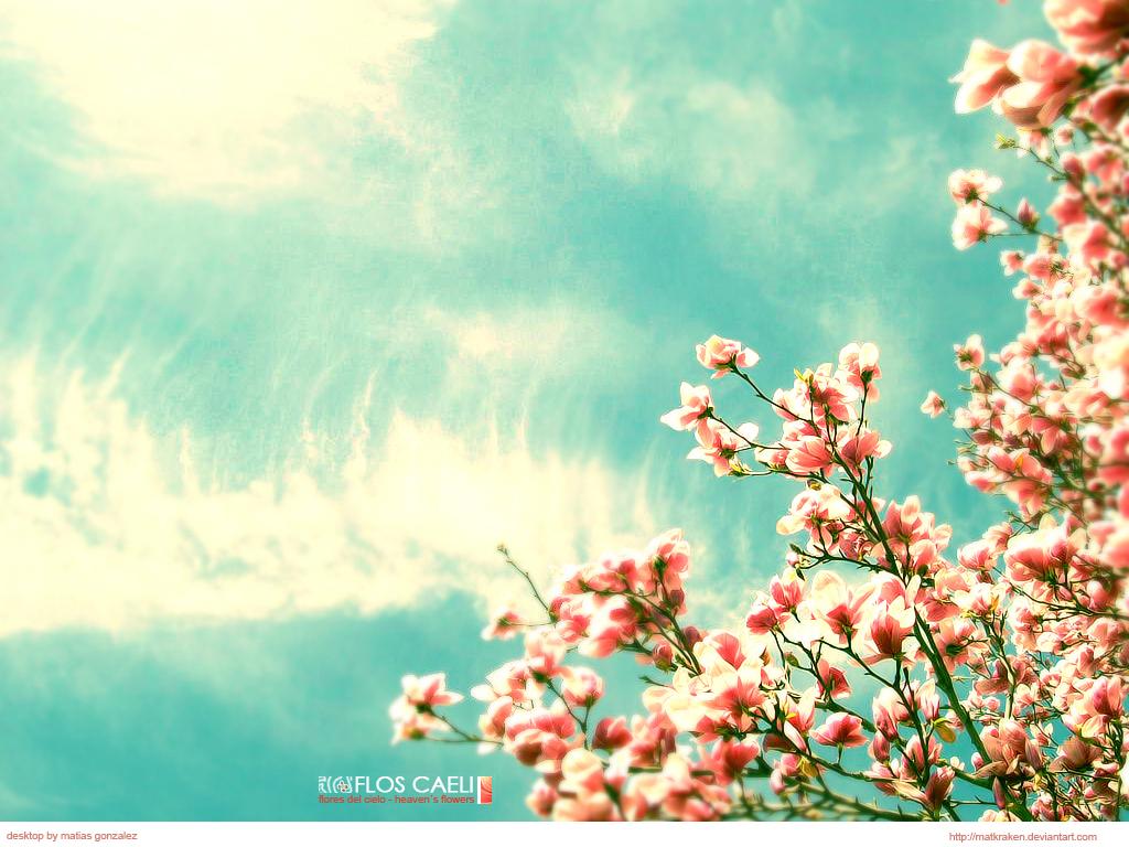 Papel De Parede Flores Do Céu Wallpaper Para Download No