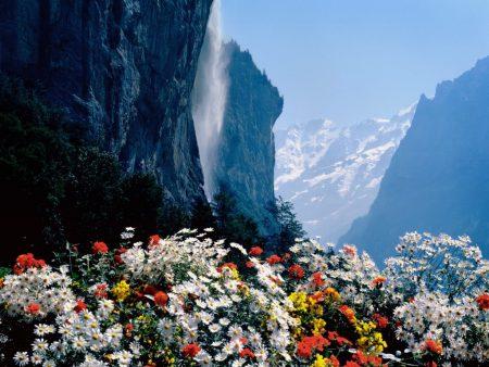 Papel de parede Flores e Cachoeira para download gratuito. Use no computador pc, mac, macbook, celular, smartphone, iPhone, onde quiser!