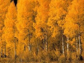 Papel de parede Floresta amarela