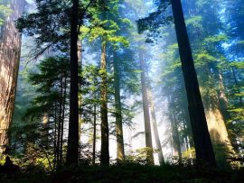 Papel de parede Floresta ao sol