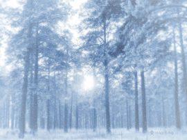 Papel de parede Floresta no inverno