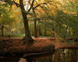 Papel de parede Floresta no outono