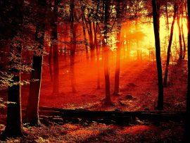 Papel de parede Floresta Vermelha