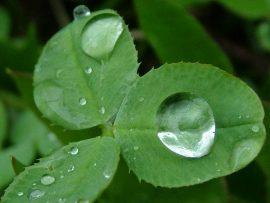 Papel de parede Folha na chuva