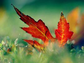 Papel de parede Folha Seca de Outono