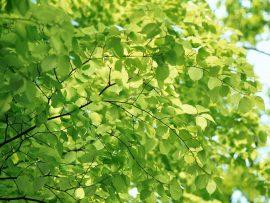 Papel de parede Folhas ao sol