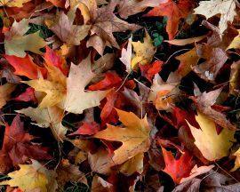 Papel de parede Folhas de Outono