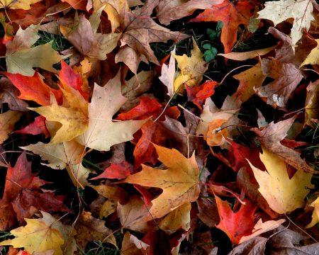 Papel de parede Folhas de Outono para download gratuito. Use no computador pc, mac, macbook, celular, smartphone, iPhone, onde quiser!