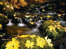 Papel de parede Folhas na cachoeira