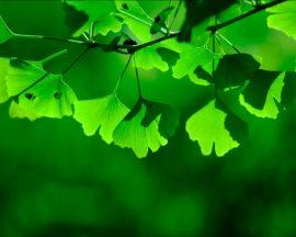 Papel de parede Folhas verdes
