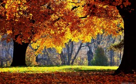 Papel de parede Folhas de Outono no Parque