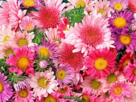 Papel de parede Flores Coloridas