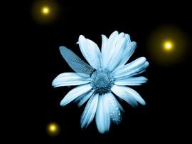 Papel de parede Fringe: Flor