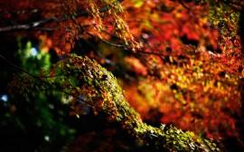 Papel de parede Galhos no Outono