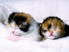 Papel de parede Gatinhos dormindo