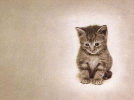 Papel de parede Gato #2