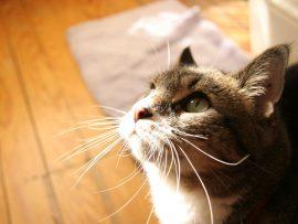 Papel de parede Gato ao sol