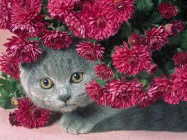 Papel de parede Gato e Flores
