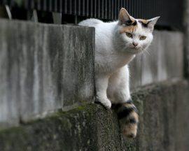 Papel de parede Gato esperto
