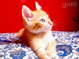 Papel de parede Gato na cama