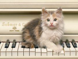 Papel de parede Gato no piano