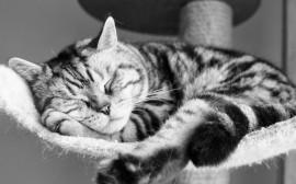 Papel de parede Gato Dorminhoco