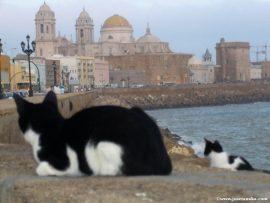 Papel de parede Gatos em Cadiz