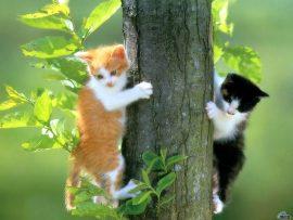 Papel de parede Gatos na Árvore