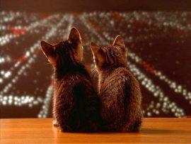 Papel de parede Gatos olhando a cidade