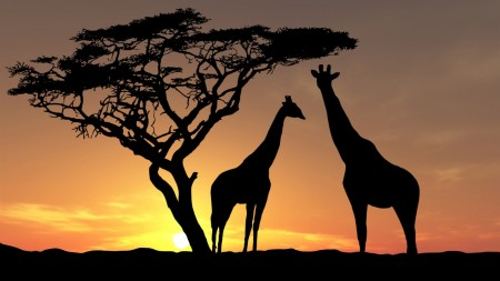 Papel de parede Girafas ao Pôr-do-Sol para download gratuito. Use no computador pc, mac, macbook, celular, smartphone, iPhone, onde quiser!
