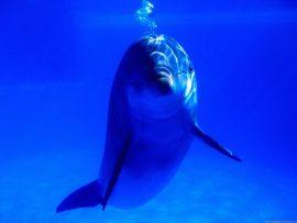 Papel de parede Golfinho