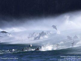 Papel de parede Golfinhos