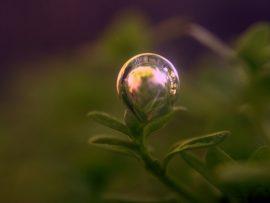 Papel de parede Gota de Água – Beleza