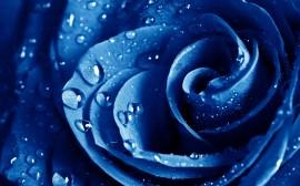 Papel de parede Gotas na Rosa Azul