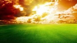 Papel de parede Grama Verde, Dia Ensolarado