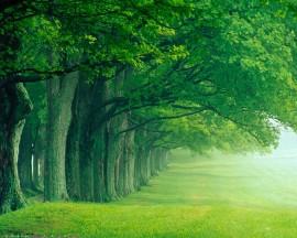 Papel de parede Floresta Verde