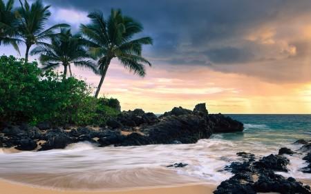 Papel de parede Praia com Palmeiras no Havaí para download gratuito. Use no computador pc, mac, macbook, celular, smartphone, iPhone, onde quiser!
