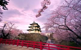 Papel de parede Castelo japonês e cerejeiras