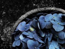 Papel de parede Hortênsia – Azul