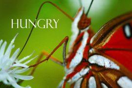 Papel de parede Hungry