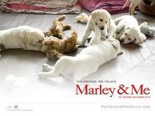 Papel de parede Marley e Filhotes para download gratuito. Use no computador pc, mac, macbook, celular, smartphone, iPhone, onde quiser!