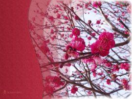 Papel de parede Japão – Sakura