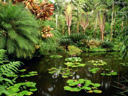 Papel de parede Jardim Botânico – Hawaii para download gratuito. Use no computador pc, mac, macbook, celular, smartphone, iPhone, onde quiser!