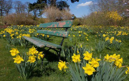 Papel de parede Jardim Botânico para download gratuito. Use no computador pc, mac, macbook, celular, smartphone, iPhone, onde quiser!