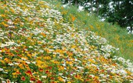 Papel de parede Jardim Florido