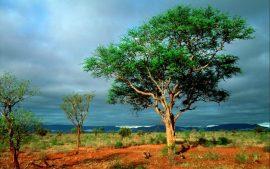 Papel de parede Kruger National Park